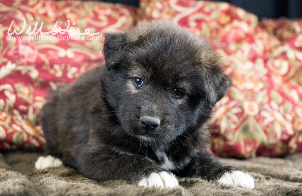 Quick Rescue Puppies William Wise